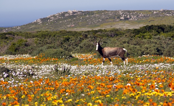 5 of the Blooming Best Places to See Wildflowers in The Western Cape