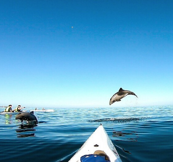 Kayaking with Dolphins: An Atlantic Outlook Experience at