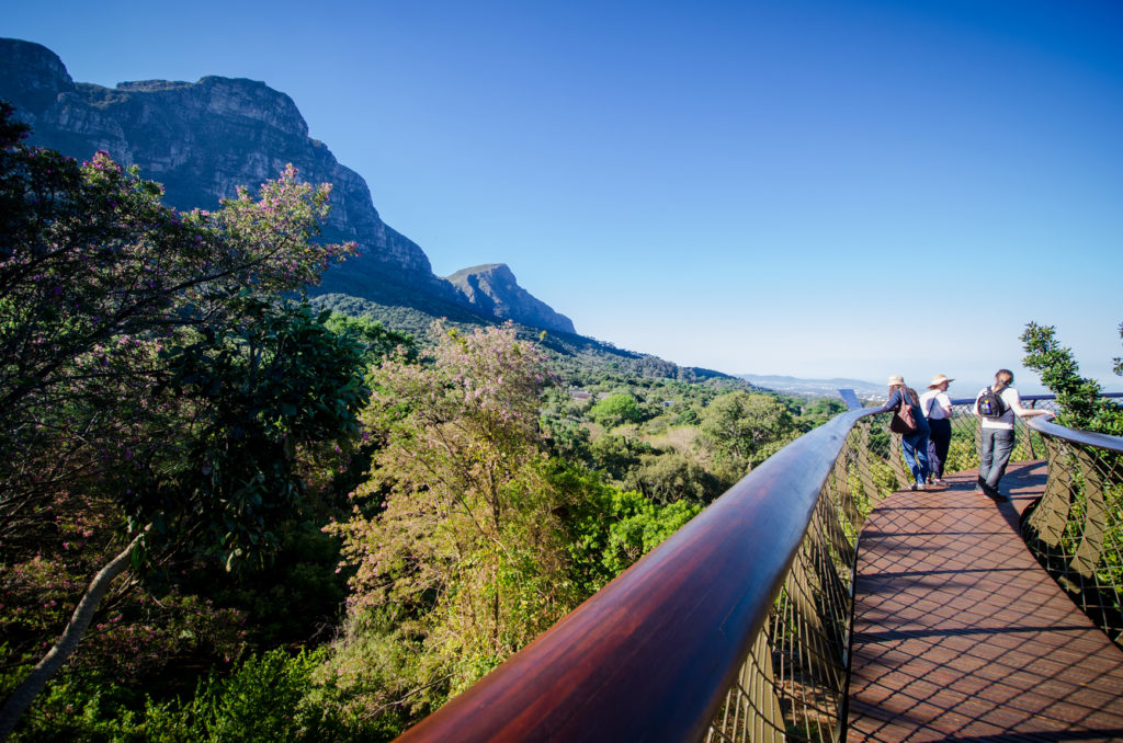 Visitors enjoy the Boomslag at Kirstenbosch (3)